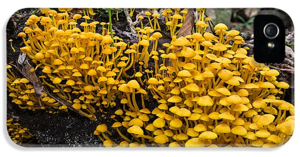Mushrooms On Tree Trunk Panguana Nature IPhone 5 Case by Konrad Wothe