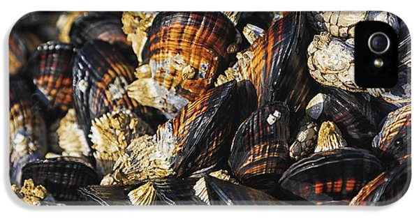 Mussels And Barnacles IPhone 5 Case