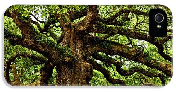 Mystical Angel Oak Tree IPhone 5 Case