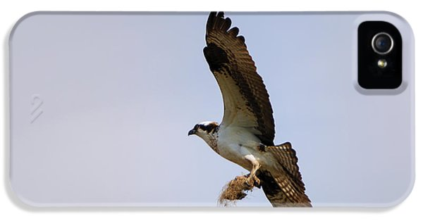 Osprey iPhone 5 Case - Nest Builder by Mike  Dawson