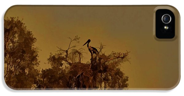 Nesting Jabiru  IPhone 5 Case by Douglas Barnard