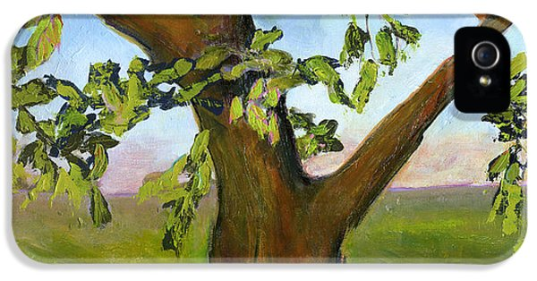 Nesting Tree IPhone 5 Case by Blenda Studio