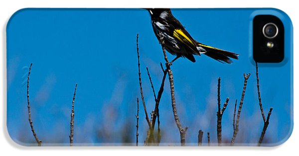 IPhone 5 Case featuring the photograph New Holland Honeyeater by Miroslava Jurcik