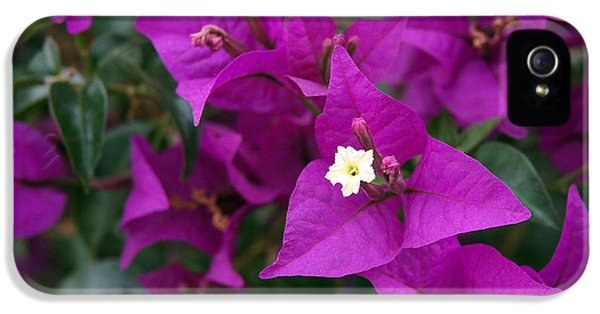 New River Bougainvillea IPhone 5 Case by Rona Black