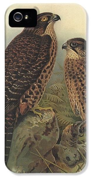 New Zealand Falcon IPhone 5 Case by Dreyer Wildlife Print Collections