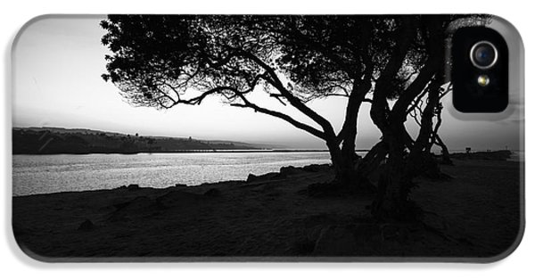 Newport Beach Jetty Tree Black And White Photo IPhone 5 Case by Paul Velgos