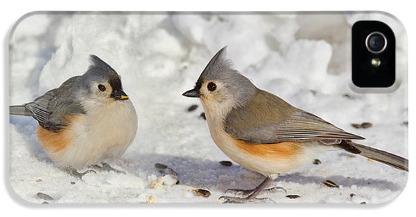 Nice Pair Of Titmice IPhone 5 Case by John Absher