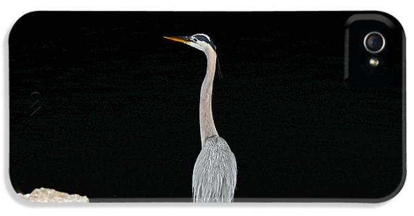 Night Of The Blue Heron 2 IPhone 5 Case by Anthony Baatz