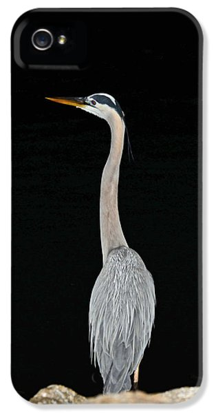Night Of The Blue Heron 3 IPhone 5 Case by Anthony Baatz