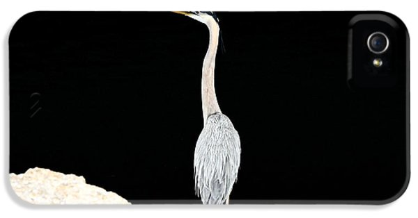 Night Of The Blue Heron  IPhone 5 Case by Anthony Baatz