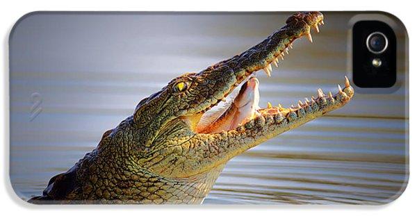 Nile Crocodile Swollowing Fish IPhone 5 Case by Johan Swanepoel