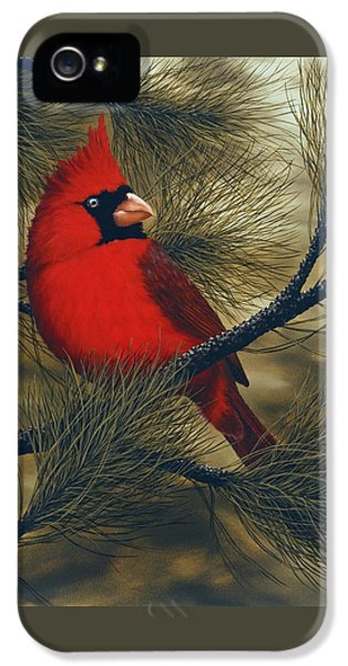 Northern Cardinal IPhone 5 Case by Rick Bainbridge