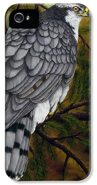 Northern Goshawk IPhone 5 Case by Rick Bainbridge