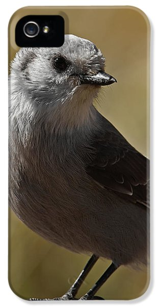 Northern Mockingbird IPhone 5 Case by Ernie Echols