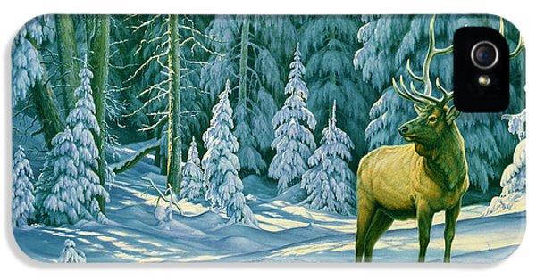 Bull iPhone 5 Case - October Snow by Paul Krapf