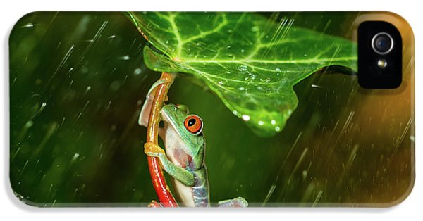 Amphibians iPhone 5 Case - Ohh Noo :( It's Raining by Kutub Uddin