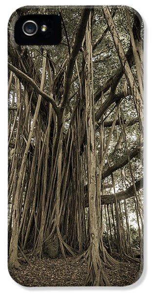 Old Banyan Tree IPhone 5 Case
