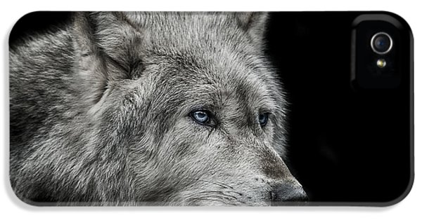 Wolves iPhone 5 Case - Old Blue Eyes by Paul Neville