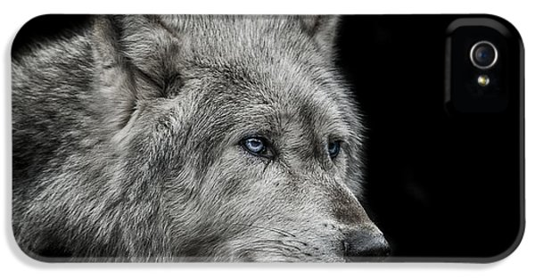 Old Blue Eyes IPhone 5 Case by Paul Neville