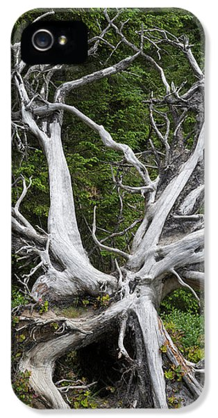 Old Dead Tree In A Forest, Shore Acres IPhone 5 Case by Panoramic Images