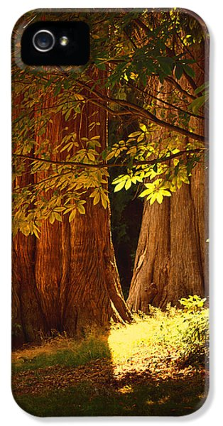 Breathe iPhone 5 Case - Old Forest by Maria Angelica Maira