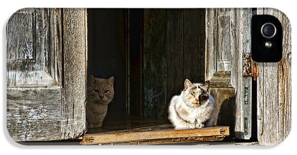 Old Knox Church Cats IPhone 5 Case