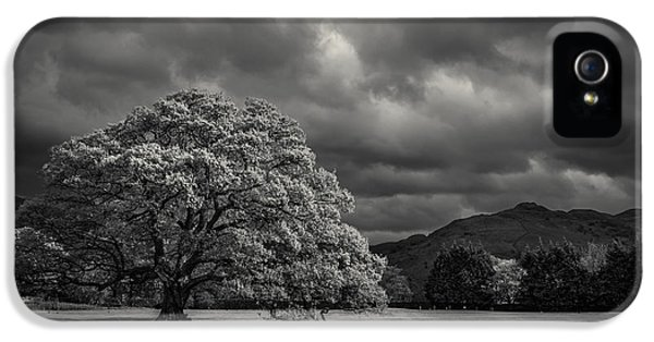 The Old Oak And The Crow IPhone 5 / 5s Case by Chris Fletcher