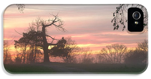 Old Tree At Sunset IPhone 5 / 5s Case by Brian Harig