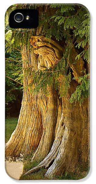 Breathe iPhone 5 Case - Old Tree by Maria Angelica Maira