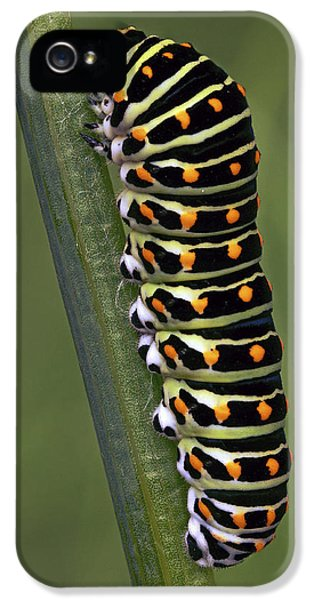 Oldworld Swallowtail Butterfly IPhone 5 Case by Frans Hodzelmans