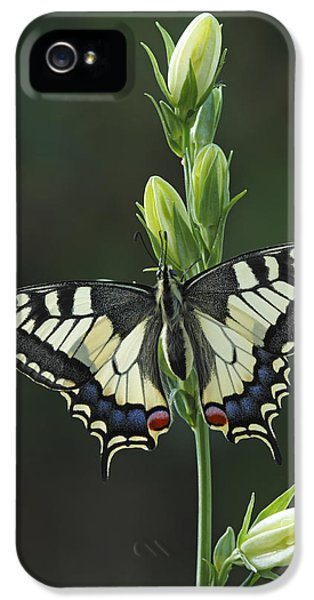 Oldworld Swallowtail Butterfly IPhone 5 Case by Silvia Reiche