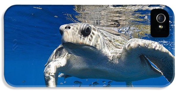 Olive Ridley Turtle IPhone 5 Case by Christopher Swann