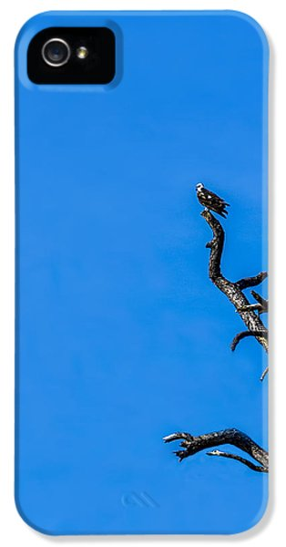 Osprey iPhone 5 Case - On Point by Marvin Spates