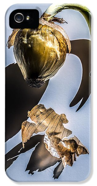 Onion Skin And Shadow IPhone 5 Case by Bob Orsillo