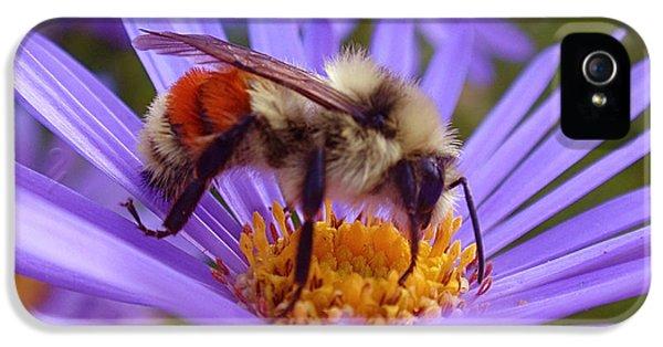 Orange-banded Bee IPhone 5 Case