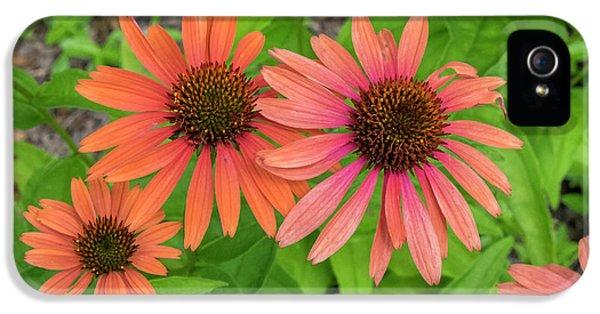 Orange Coneflower, Vermont, Usa IPhone 5 Case