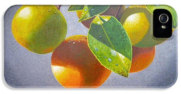 Oranges IPhone 5 Case by Carey Chen