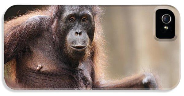 Orangutan IPhone 5 / 5s Case by Richard Garvey-Williams