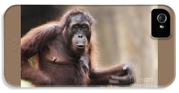 Orangutan IPhone 5 Case by Richard Garvey-Williams