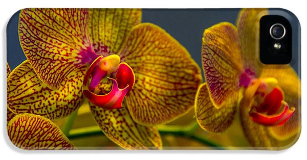 Orchid iPhone 5 Case - Orchid Color by Marvin Spates