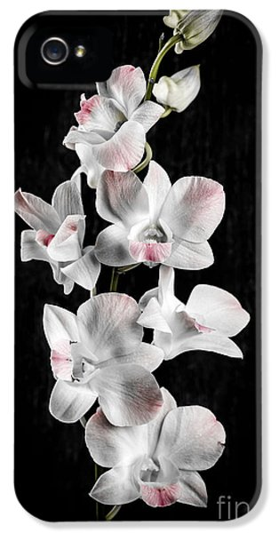 Orchid Flowers On Black IPhone 5 / 5s Case by Elena Elisseeva
