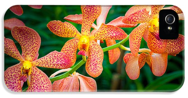 Orchids IPhone 5 / 5s Case by Inge Johnsson