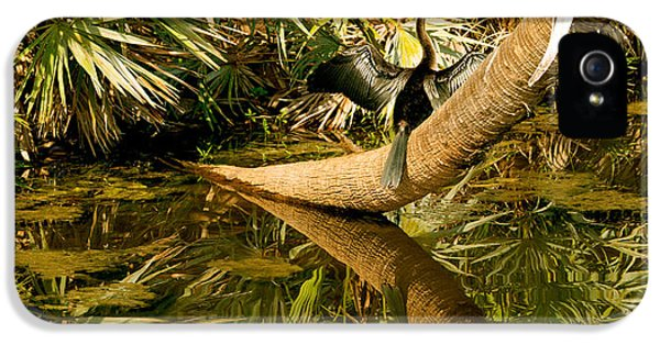 Oriental Darter Anhinga Melanogaster IPhone 5 Case by Panoramic Images