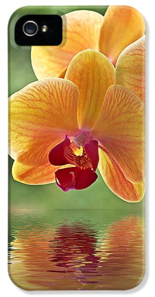 Orchid iPhone 5 Case - Oriental Spa - Square by Gill Billington