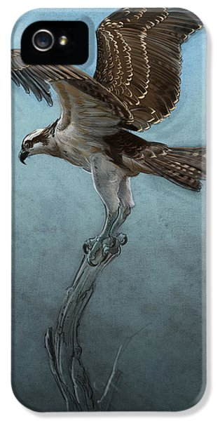 Hawk iPhone 5 Case - Osprey by Aaron Blaise