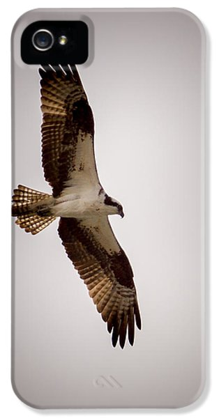 Osprey IPhone 5 Case by Ernie Echols
