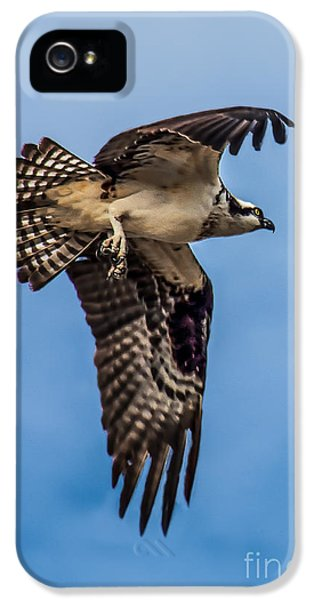Osprey iPhone 5 Case - Osprey Flying Away by Robert Bales