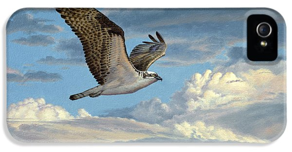 Hawk iPhone 5 Case - Osprey In The Clouds by Paul Krapf