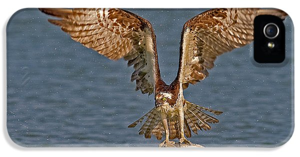 Osprey Morning Catch IPhone 5 Case by Susan Candelario