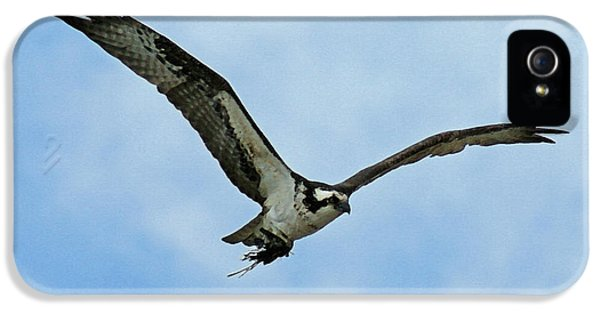 Osprey Nest Building IPhone 5 Case by Ernie Echols